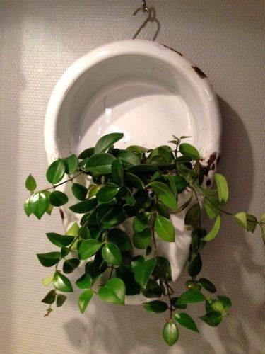 Planter i gamle ting og sager
